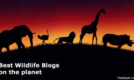 Top 50 Wildlife Blogs & Websites on the Web | Wildlife Website List