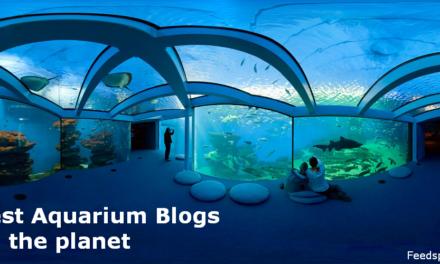 Top 30 Aquarium Blogs & Websites For Aquarists & Marine Enthusiasts