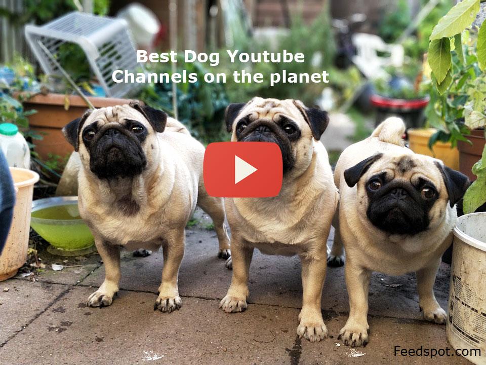 Top 100 Dog YouTube Channels on Dog Breeds, Dog Training & Funny Dog