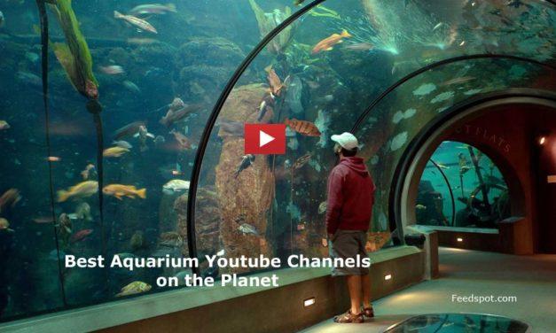 Top 75 Aquarium Youtube Channels For Aquarists & Marine Enthusiasts