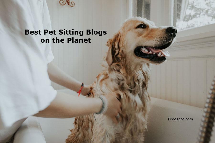 Top 50 Pet Sitting Blogs, Websites & Newsletters in 2019