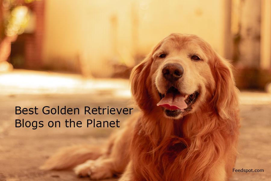 Top 15 Golden Retriever Blogs, News Websites & Newsletters